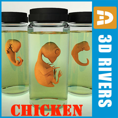 3d chicken embryo model