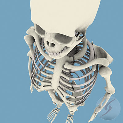 esqueleto human skeleton 3d 3ds