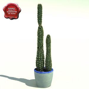 3d cactus cereus
