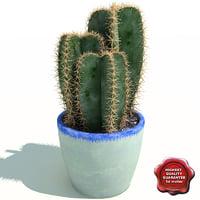Cactus Cereus peruvianus V2