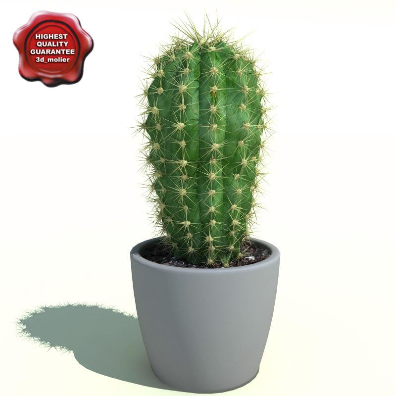 3d cactus cleistocactus starausii model