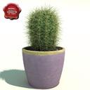 Oreocereus cactus 3D models