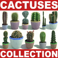 Cactuses collection