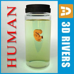 3d weeks human embryo model