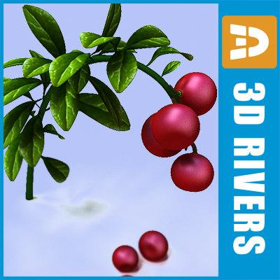 3dsmax lingonberry berries
