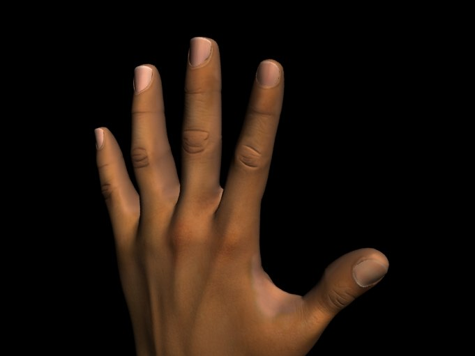 realistic hand max