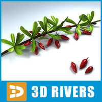 berberis berries fruit 3d 3ds