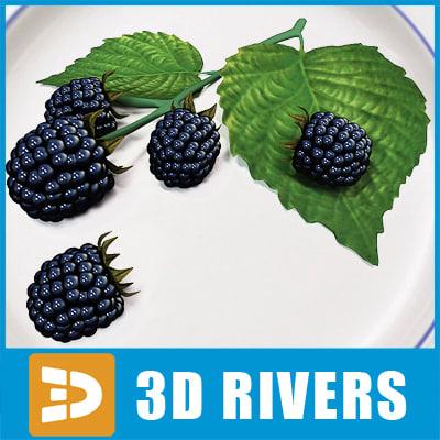 blackberry berries fruit 3d model