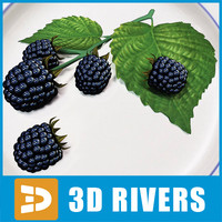 blackberry berries fruit 3d model