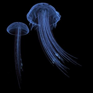 jelly fish 3d max