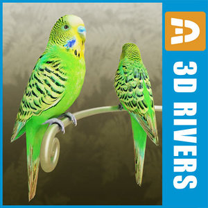 x budgie birds parrots