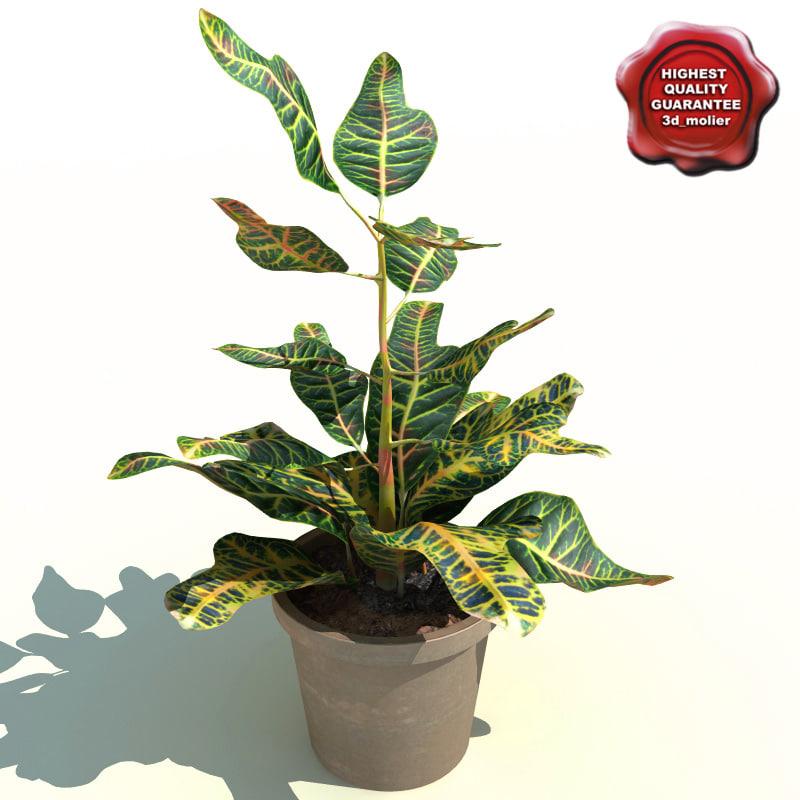 3d codiaeum variegatum florida select