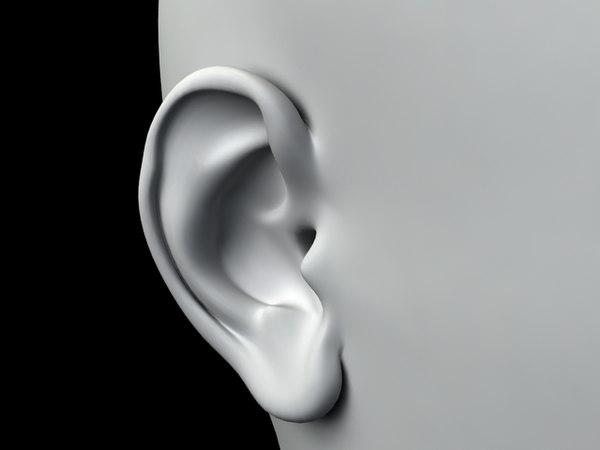 3d model ear anatomically