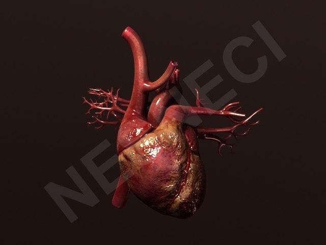 heart 3d obj