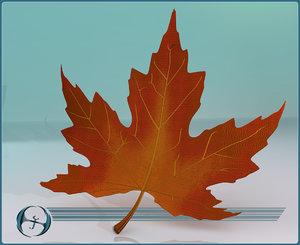 maple leaves 3d model