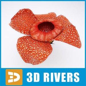 3d rafflesia flowering model