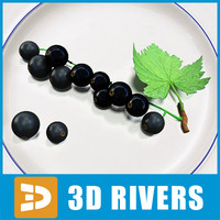Black currant by 3DRivers