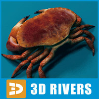 Crab by 3DRivers