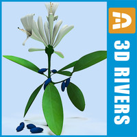 3d model honeysuckle berries flowers
