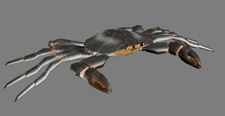 crab - 3d model