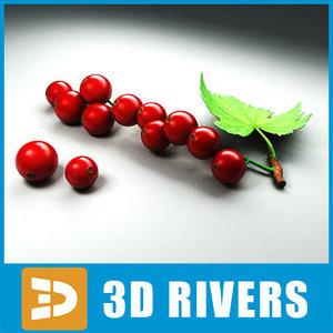 maya red currant berries