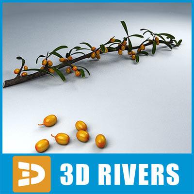 3ds sea buckthorn fruit