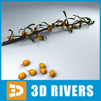Sea buckthorn by 3DRivers