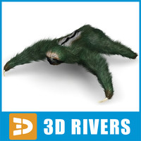 sloth animals mammals 3d model