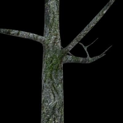 3d model bark plant