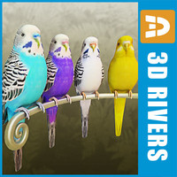 Budgies by 3DRivers