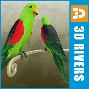 3d red winged parrot birds