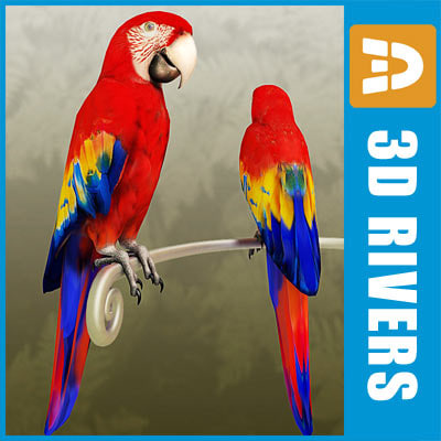 3d model red macaw parrot birds