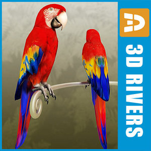3d model red macaw parrot birds