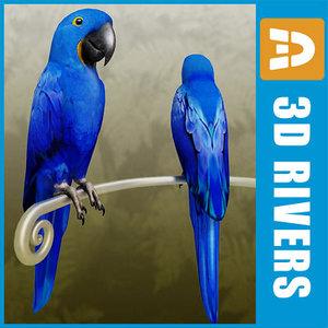 3ds max blue parrot birds