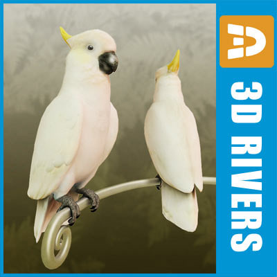 3d model white cockatoo parrot birds