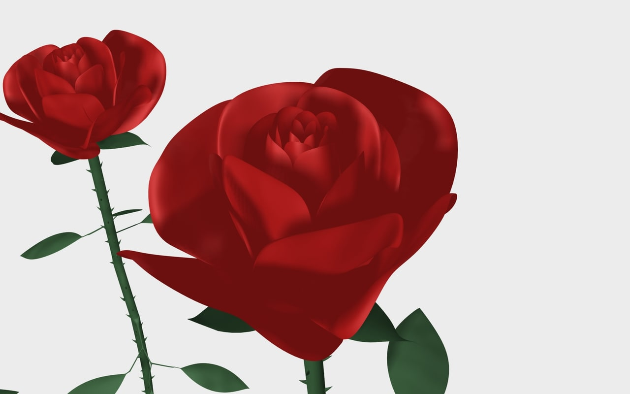 max rose flower