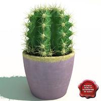 cactus lobivia famatimensis c4d