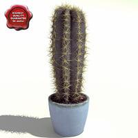 Cactus Trichocereus candicans