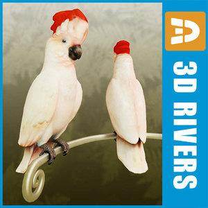 white cockatoo parrot birds 3d model