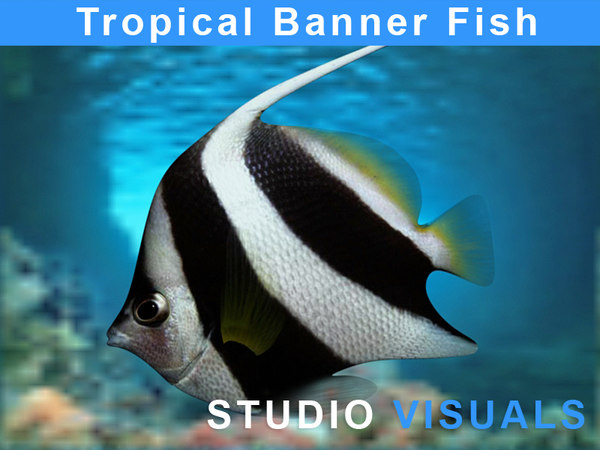 3d banner fish tropical model