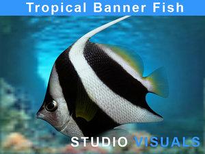 3d banner fish tropical model