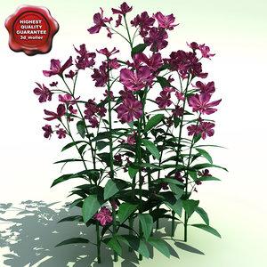 3d nerium oleander