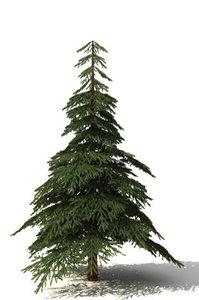 free fir tree 3d model