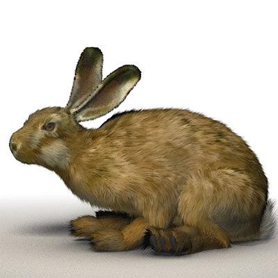 realistic rabbit xsi