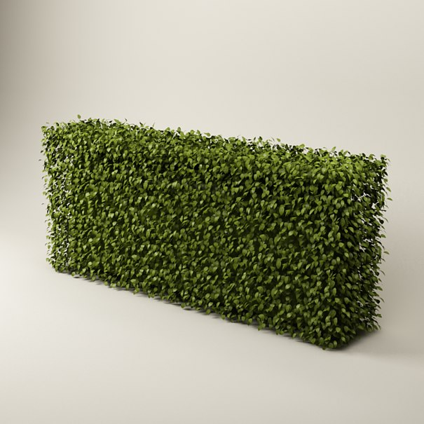 maya bush hedge