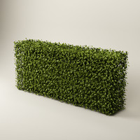 maya bush hedge