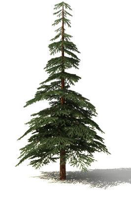 fir tree 3ds free