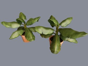 3d plant beautifully decorative model