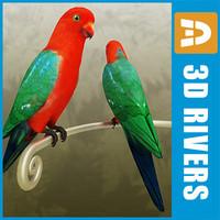 3dsmax king parrot birds