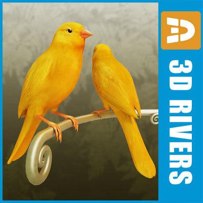 canary bird x